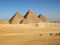 Приставы выдворили египтянина с новгородской лесопилки
