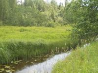 В Новгородской области появился природный памятник, где растут кострец, фрулляния, схенус и кокушник