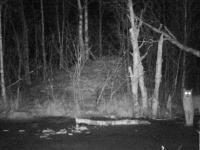 В Рдейском заповеднике рассказали о семействе рысей, которые чудом попали в фотоловушку