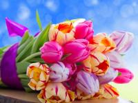 Андрей Никитин и Елена Писарева поздравляют жительниц Новгородской области с 8 марта