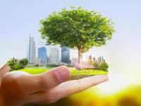 Чудово и Боровичи поборются за гранты для создания комфортной городской среды