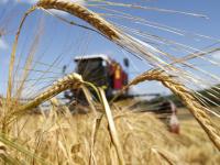 Новгородские аграрии получили субсидии по программам господдержки более чем на 27 млн рублей