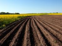 Новый закон позволит новгородским фермерам получить земли в безвозмездное пользование