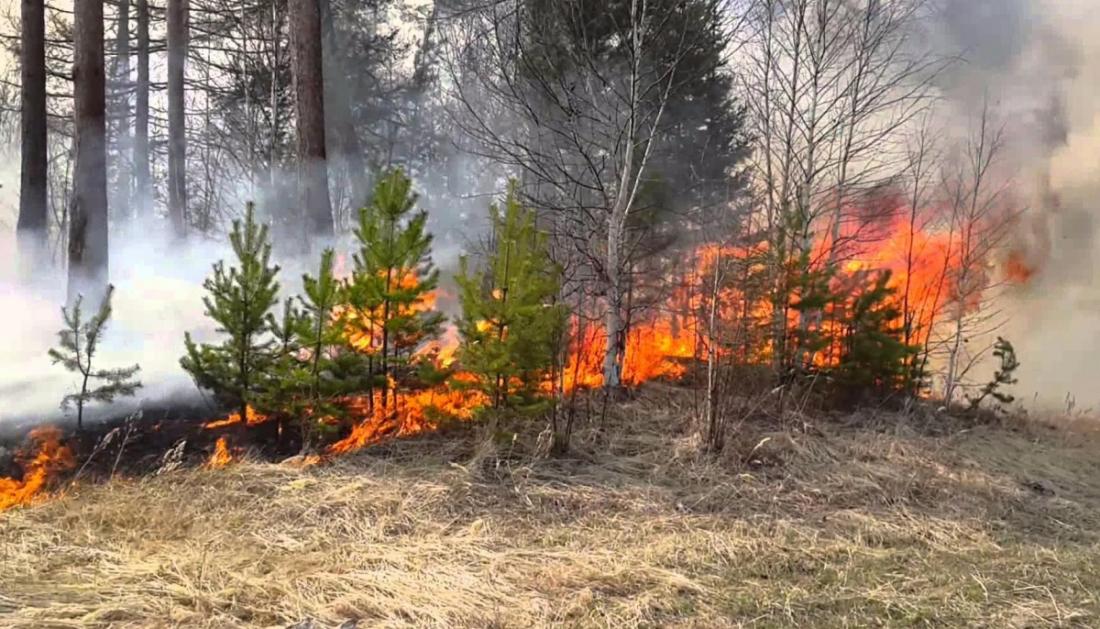 В Новгородской области МЧС на сегодня и завтра объявило IV класс пожароопасности