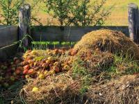 Как подготовить самое дешевое и одно из самых лучших удобрений для огорода?