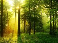 Министр природных ресурсов и экологии РФ поддержал создание «Новгородской лесной школы»