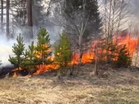 В Новгородской области зарегистрирован первый лесной пожар 2019 года