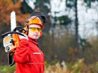Тимофей Гусев рассказал о планах по созданию Лесной школы в Новгородской области