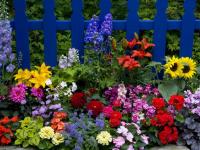 Цветы для «лентяев»: какие многолетники можно посадить на огороде?