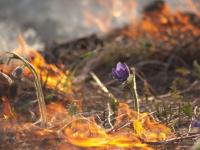 В Новгородской области начался массовый пал травы