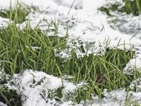 В Новгородскую область на этой неделе могут прийти дожди и мокрый снег