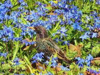 В Петербурге можно будет полюбоваться цветочными коврами и самыми невероятными кактусами