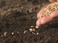 В Шимском районе аграрии увеличивают площади под посев