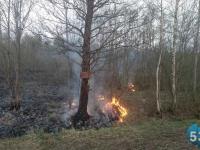 Водители помогали пожарным в борьбе с огнем у трассы в Новгородском районе