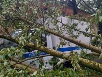 В Великом Новгороде деревья рухнули на грузовичок полиции и легковушки