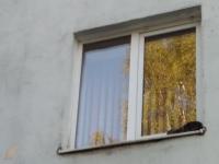МЧС, участковый и трое раненых — в Великом Новгороде прошла операция по спасению котенка