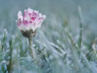 На неделе местами в Новгородской области ожидаются легкие заморозки