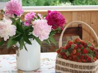 Работы на огороде: как и чем подкормить и обработать землянику, капусту и пионы?