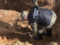 Поисковики нашли в Батецком районе захоронение мирных жителей, казненных в Великую Отечественную войну