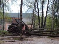 Фото: штормовой ветер прошел Валдайский район и идет на север