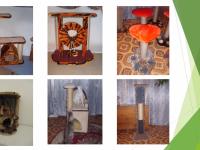 В Маревском районе создатель когтеточек и игрушек для котиков получил денежный грант