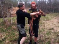 Туристы спасли двух тонувших лосят на границе Новгородской и Тверской областей