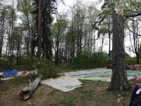 В Крестцах дерево рухнуло на батут с детьми. Госпитализирован трехлетний малыш