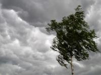 В Новгородской области всю неделю ожидаются дожди