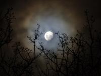 В разных районах Новгородской области два человека пропали после ночной прогулки