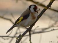 Новгородцам предлагают пройти тест-определитель местных птиц