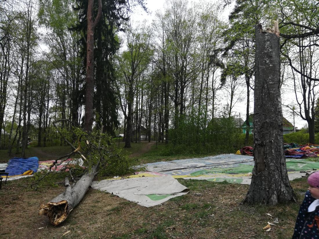 В Новгородскую область пришли грозы с порывами ветра