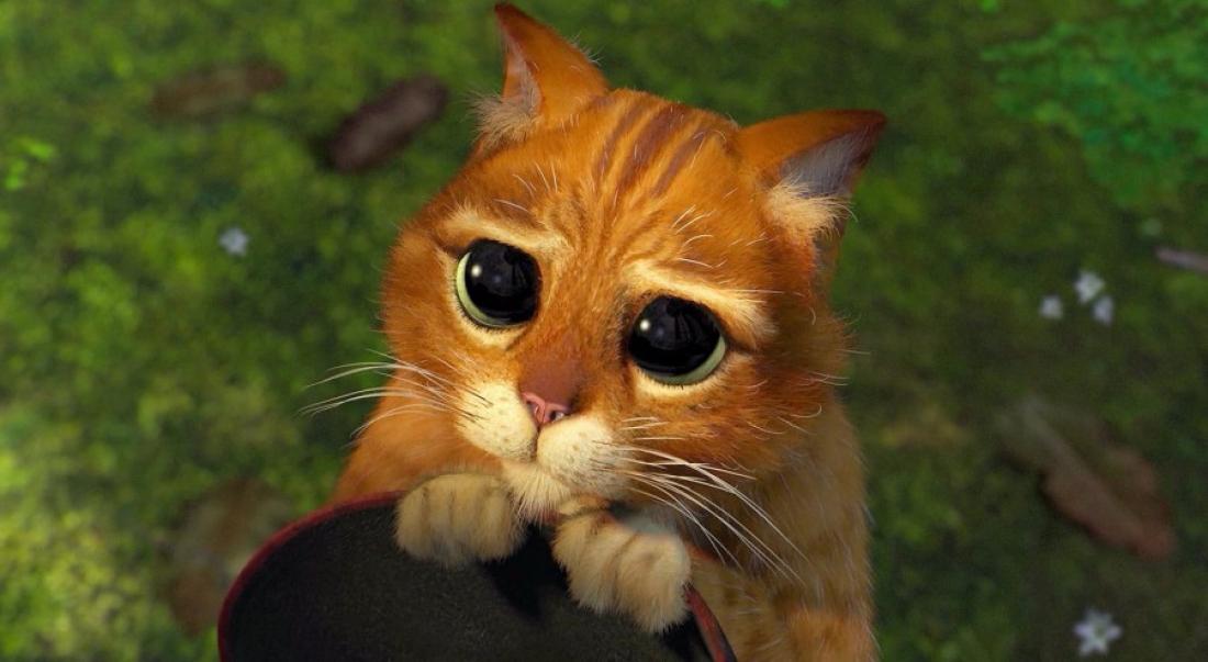 Котёнок из мультфильма «Шрек» ищет хозяев в Великом Новгороде - 53 Новости