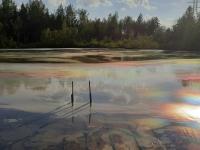 Боровичане в панике из-за того, что неизвестные сделали с озером около деревни Заречная