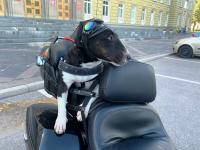 Фотофакт:  в Великий Новгород прибыл байкер Ведя