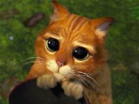 Котёнок из мультфильма «Шрек» ищет хозяев в Великом Новгороде