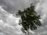 МЧС предупреждает новгородцев о приближающихся грозах и крепком ветре