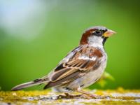 На радость любителям птиц в Великом Новгороде появятся Чайкин, Ласточкин, Воробьиный и Соловьиный переулки