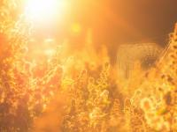 Синоптики рассказали, какой погоды ожидать новгородцам на этой неделе