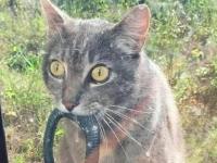 В Новгородской области появился особо умелый кот-змеелов