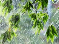 Синоптики прогнозируют похолодание в Новгородской области