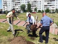 За новгородской детской поликлиникой № 2 сегодня посадили каштаны и сирень