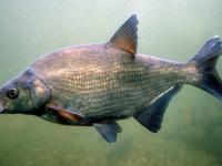 Жителя Великого Новгорода будут судить за вылов рыбы в местах нереста