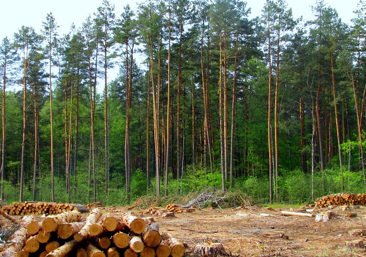 Житель Старой Руссы больше года прятался в лесу от кредитора
