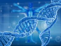 Фальшивые генетики обнаружили у пожилой новгородки проблемы с ДНК и повышенную доверчивость