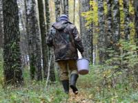 Пожилого грибника отыскали в поддорском лесу благодаря мобильнику и неравнодушию