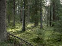 Новгородские спасатели вывели из леса женщину, которая не вышла оттуда вовремя