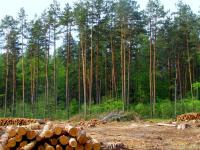 Рослесхоз вменяет Новгородской области в вину нарушения лесоустройства, которые утвердил... Рослесхоз