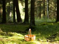 В лесу в Любытинском районе заблудились пять человек, в том числе трое детей