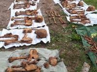 В Новгородском районе останки 11 красноармейцев случайно обнаружили между могил гражданского кладбища