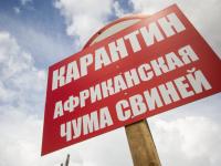 В Шимском районе объявлен карантин из-за нового очага АЧС